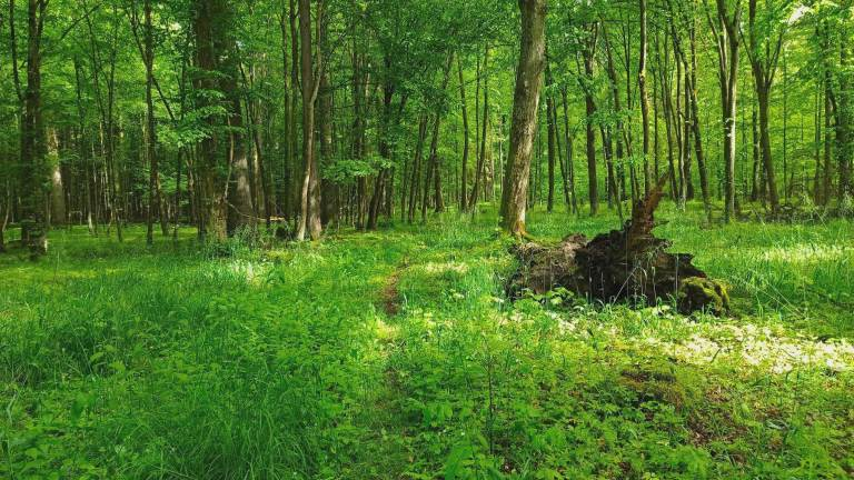 Zżycia lasu #1. Grądy