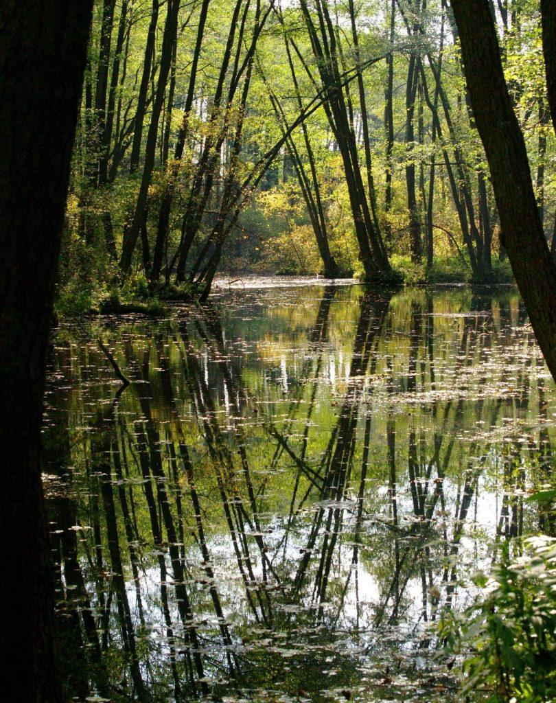 Wodo moja, wodo, jakżeś szmaragdowa, czyli Niebieskie Źródła jesienią