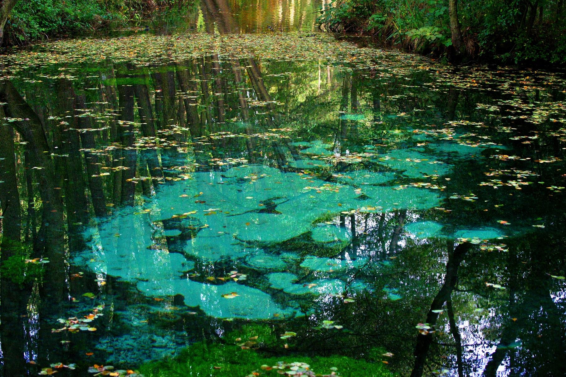 Niebieskie Źródła jesienią, czyli woda moja, wodo, jakżeś szmaragdowa