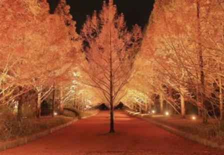 神戸森林植物園,紅葉,ライトアップ