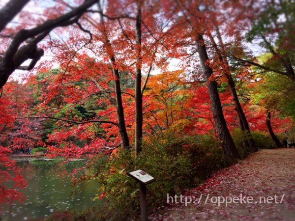 神戸森林植物園,紅葉,見頃