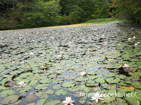 神戸市立森林植物園,長谷池