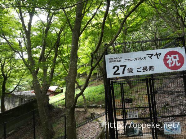 神戸市立森林植物園,カモシカ