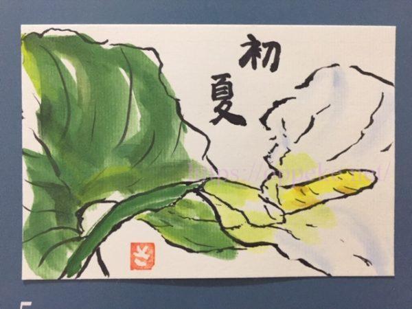 絵手紙,初夏,花