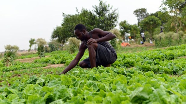 Apply to the Agriculture for Food Security 2030 Training (Fully Funded)