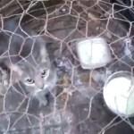 Gato que era mantido dentro de gaiola é resgatado em São José do Rio Preto