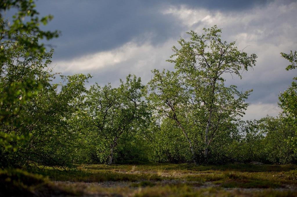 finnmarksloven_02_opstrms