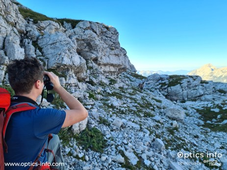 Observing the alpine ibex