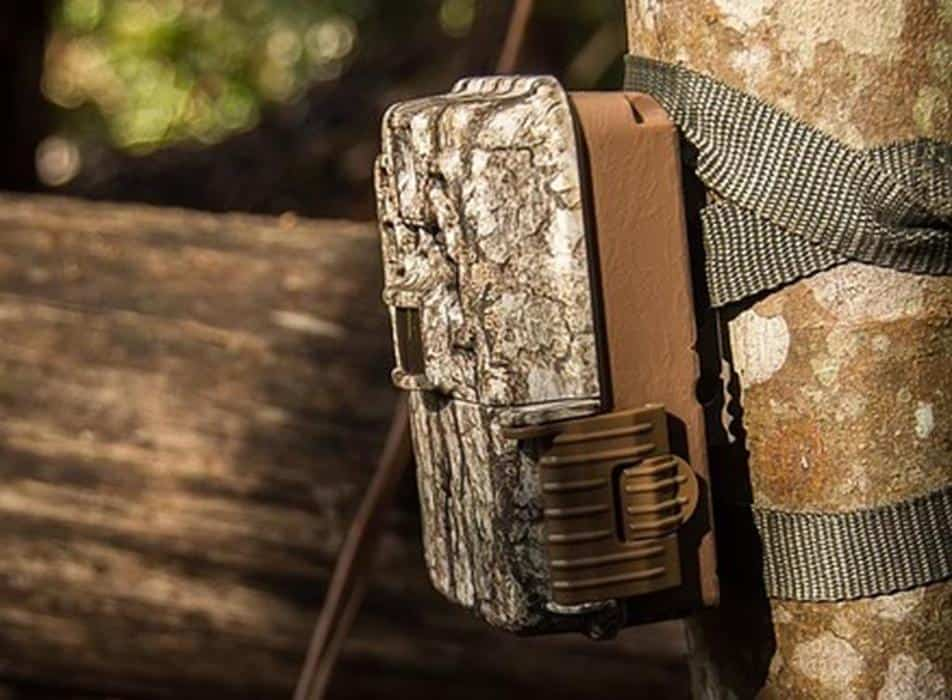 The Ultimate Trail Camera Buyers Guide