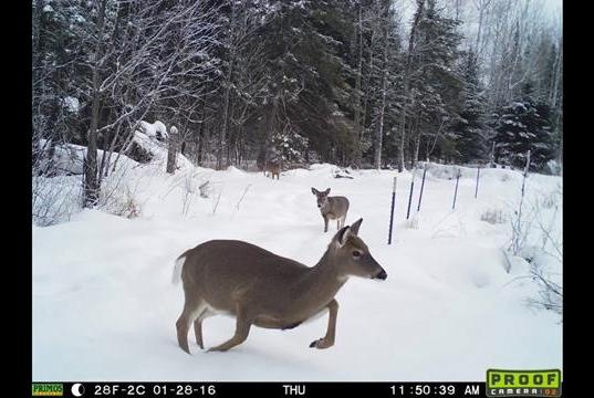 Best Primos Trail Camera Reviews For 2020