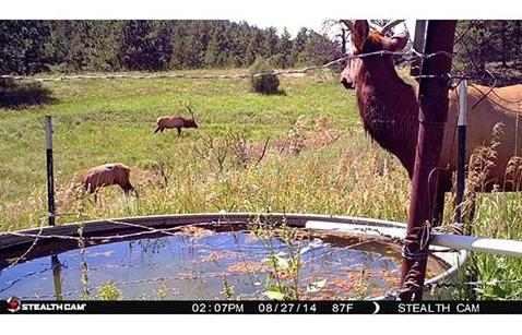 Best Infrared Trail Camera No Glow