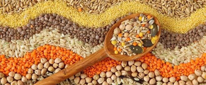 sunn proteinkilde-lavkarbokosthold