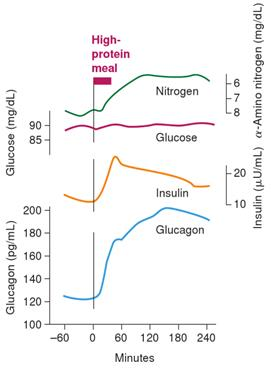 insulin and blood sugar relationship