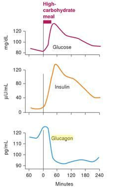 Protein and insulin. Why do my blood sugars rise after a ...