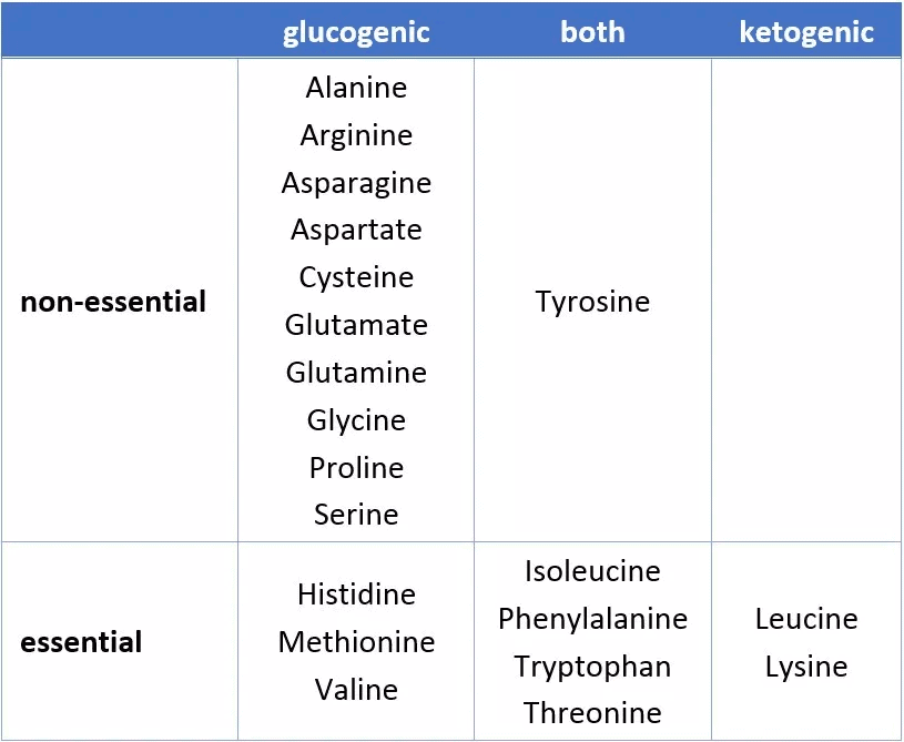 ketogenic amino acids.png
