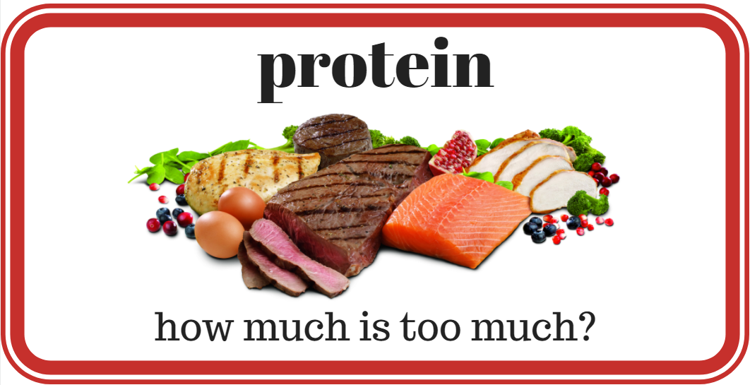 how much protein is too much  optimising nutrition