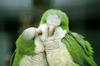 Любовта при животните, от която могат да се поучат и хората