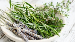 The Healer Herb Thyme – Benefits, Uses, and side effects