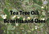 Tea Tree Oil- Benefits and Uses