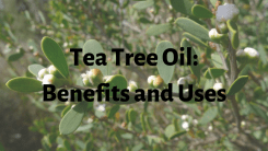 Tea Tree Oil- Benefits and Uses for Hair, Skin and Health