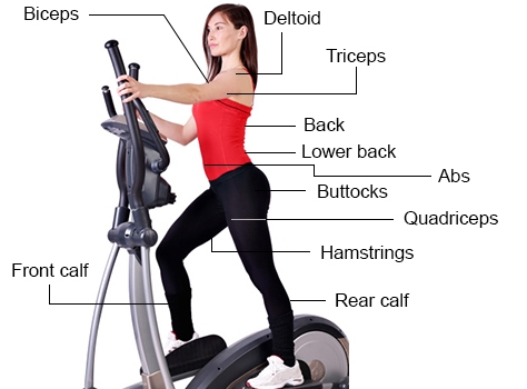 Will an Elliptical Trainer help me tone my waist ...