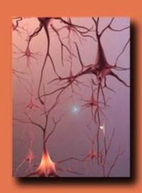 Brain Cells, Firing