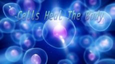 Cells Heal The Body