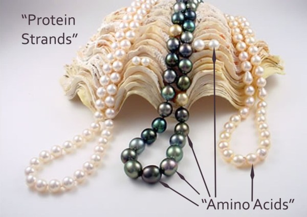 Paralleling Individual Pearls in the Strand to Amino Acids