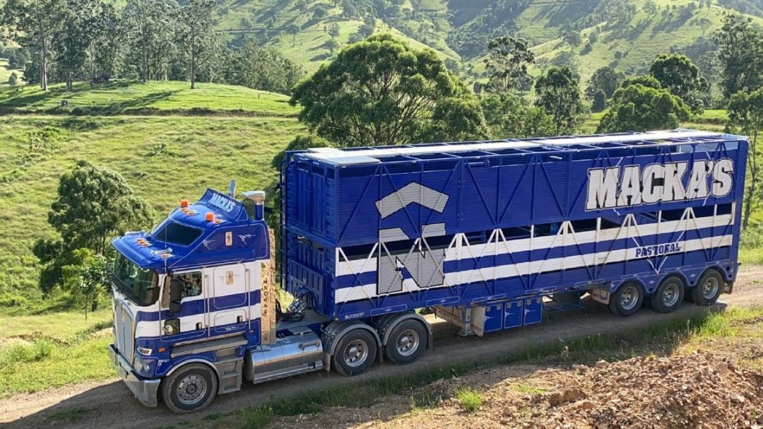Macka's ensures that the cows are transported in safe and comfortable conditions