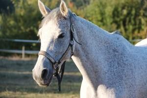 horse, mold, halter