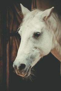horse, mold, horse head