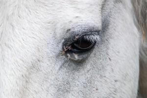 horse, horse eye, mold