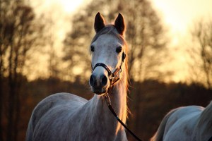 mold, horse, afterglow