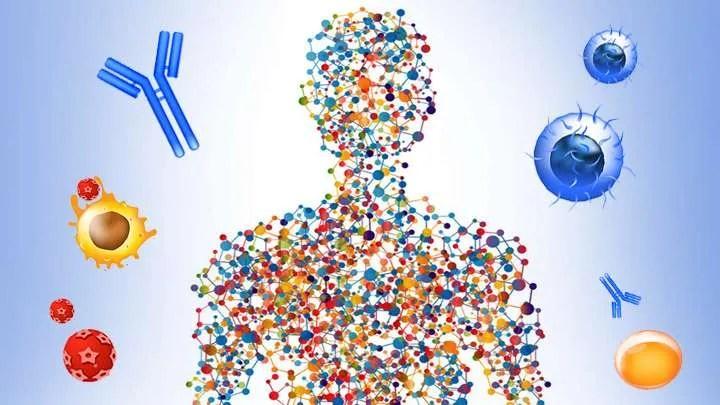 Human body Immune system
