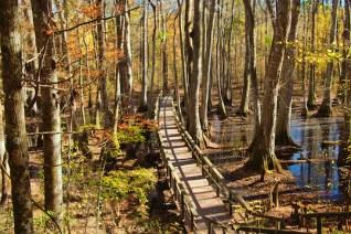 CypressSwamp2 copy