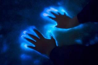 BioluminescenceThumb