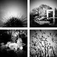 Dallas Arboretum Chihuly 4