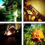 Dallas Arboretum 2