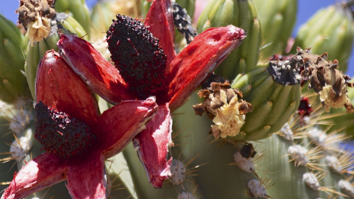 Cactus Seed Germination
