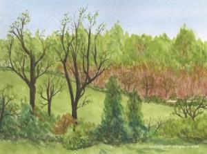 springtime-field
