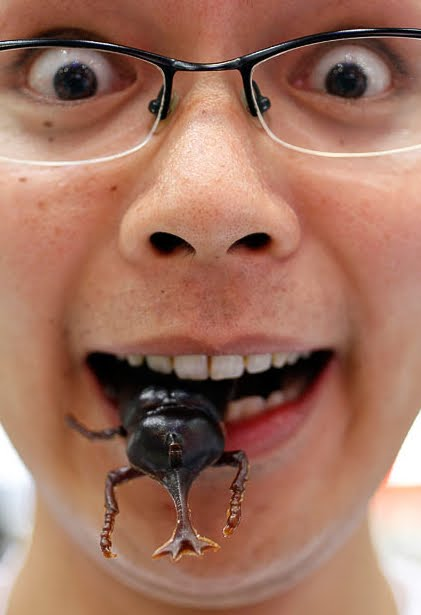 neofobia alimentar criança comendo inseto