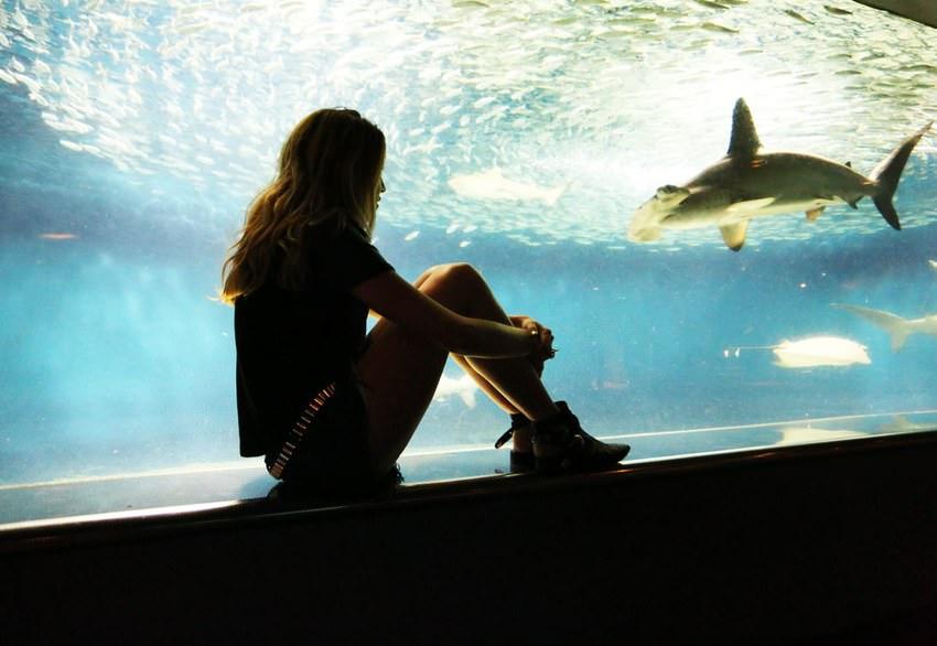Aquarium.131