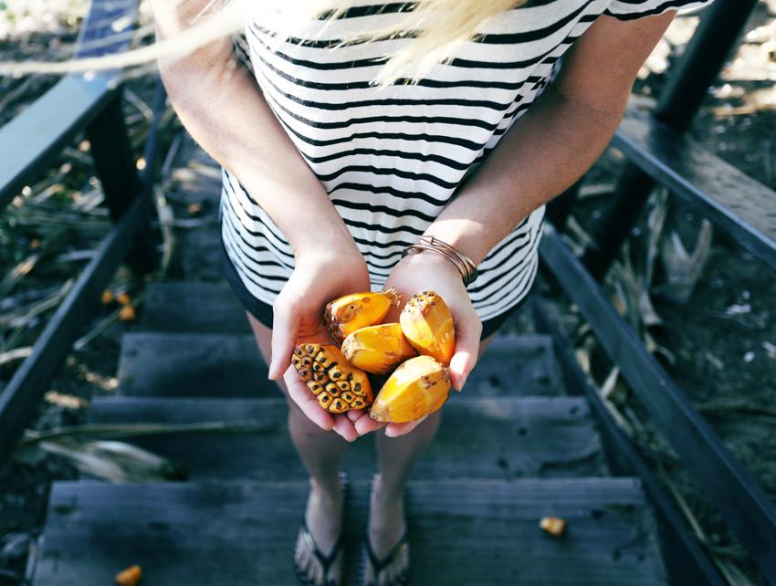 Havis-Nuts
