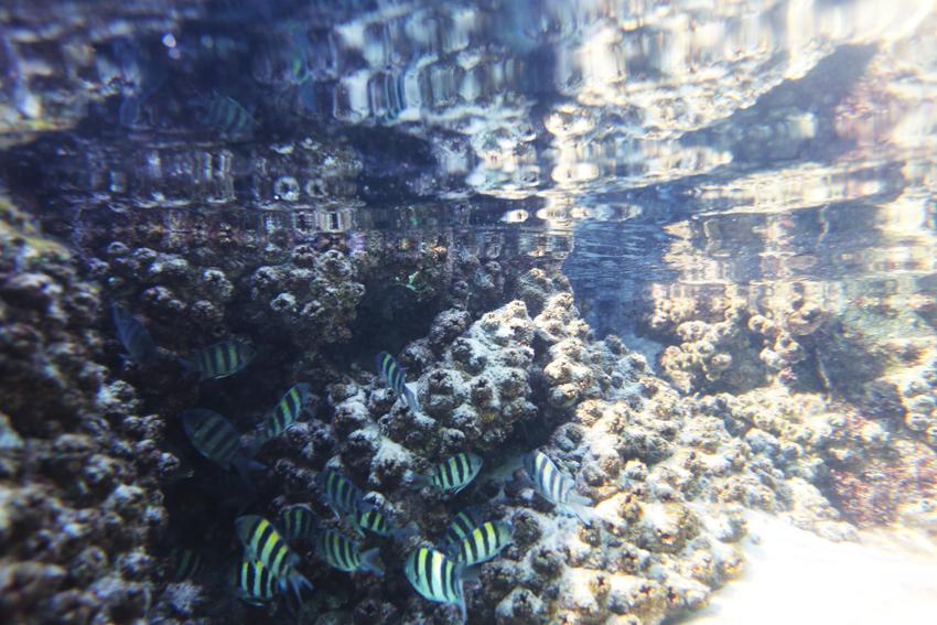 Havis-Champagne-Pools-Fish
