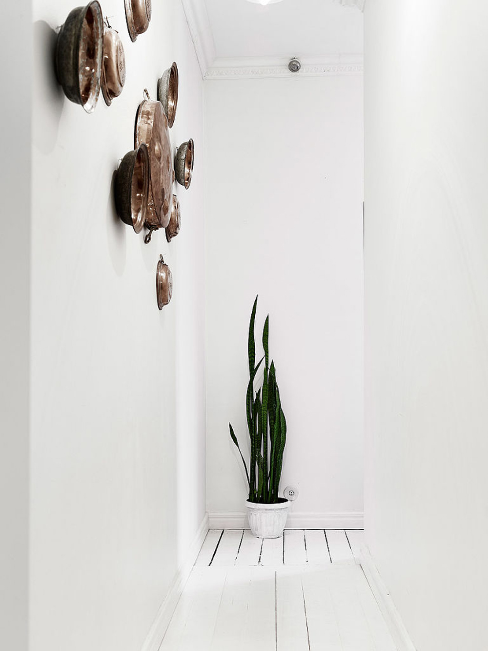 Oracle, Fox, Sunday, Sanctuary, At, Ease, Monochrome, Scandinavian, Interior, Cactus, Hallway