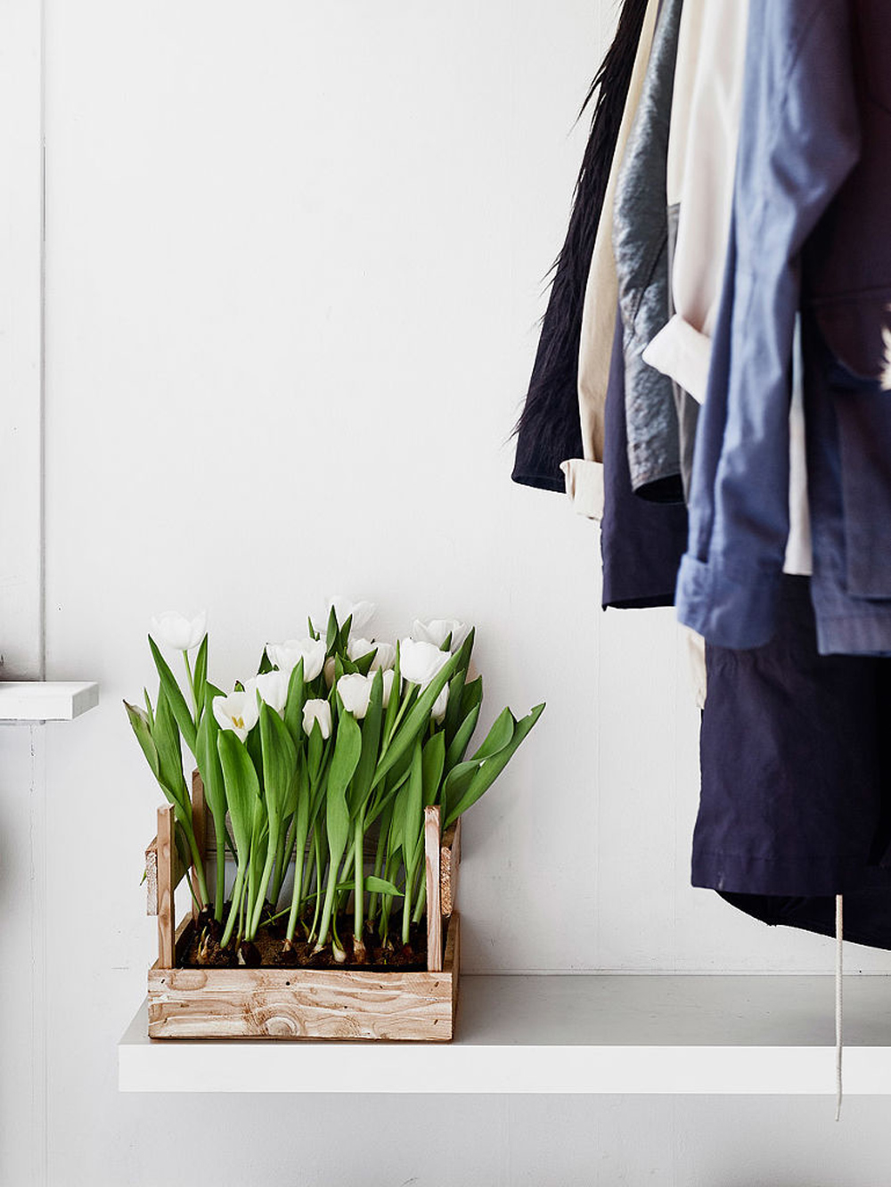 Oracle, Fox, Sunday, Sanctuary, At, Ease, Monochrome, Scandinavian, Interior, Entrance, Plants, Tulips