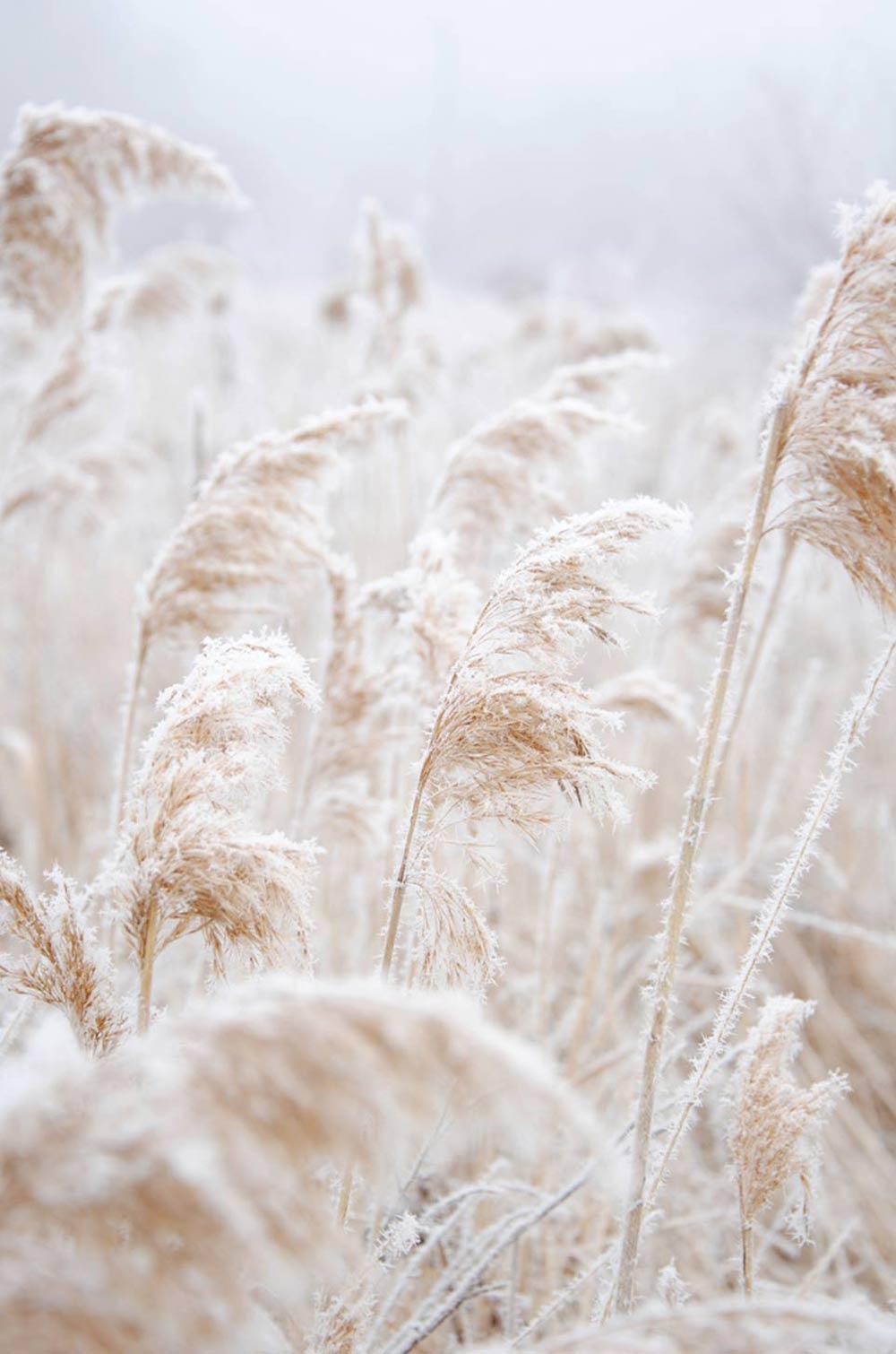 Oracle, Fox, Sunday, Sanctuary, White, Interiors, Exteriors, White, Grass