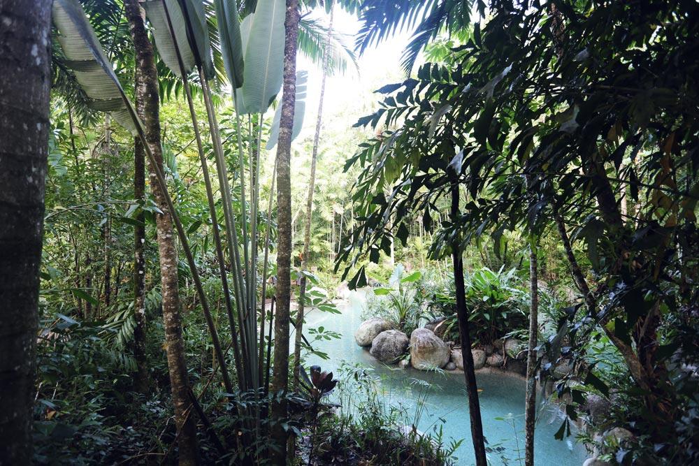 Silky, Oaks, Daintree, Pool, Travel, Oracle, Fox, Explore, Natural, Pool