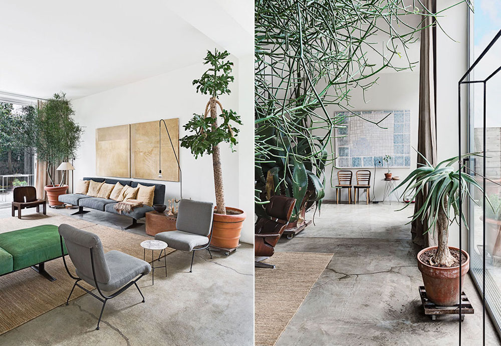 Oracle Fox, Sunday Sanctuary, prerequisites, industrial interior, green, cement, large, interior plants, giant cactus, mid century interior
