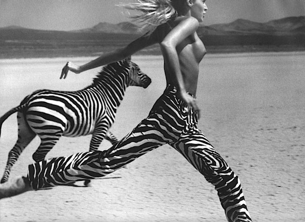 zebra-running-heat-wave-inspiration-black-and-white-oracle-fox